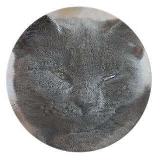 Placa relajada del gatito plato de cena