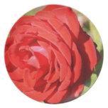 Placa romántica del rosa rojo platos de comidas