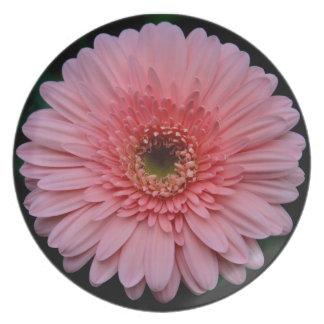 Placa rosada de la flor del Gerbera Platos