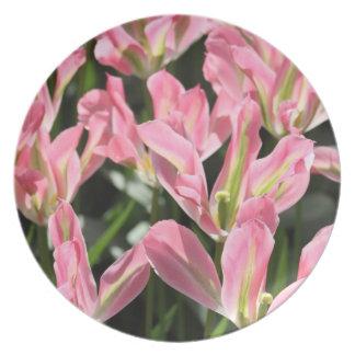 Placa rosada de la flor plato para fiesta
