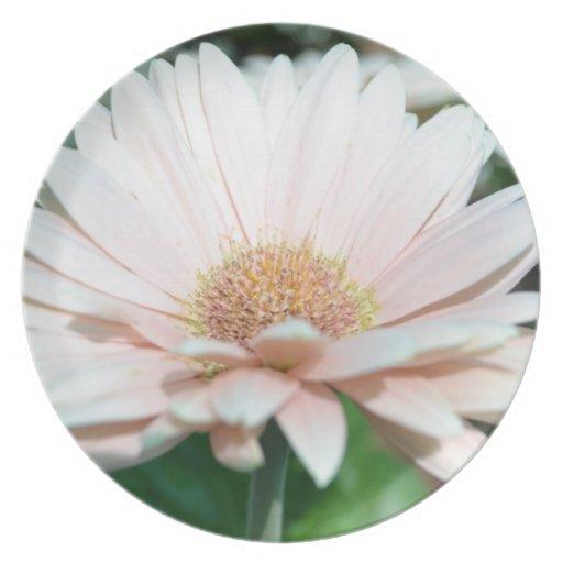 Placa rosada de la margarita del Gerbera Plato De Comida