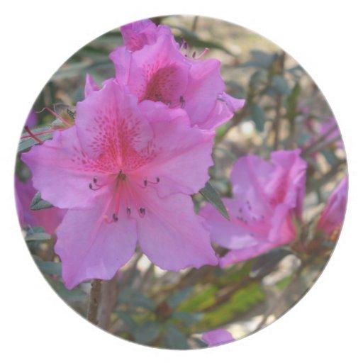 Placa rosada de las flores de las azaleas plato de comida