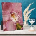 Placa rosada de las orquídeas