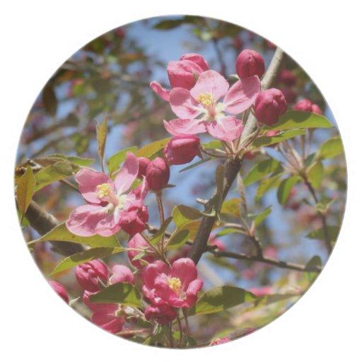 Placa rosada de los flores plato