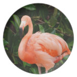 Placa rosada del flamenco plato