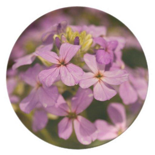 Placa rosada del Wildflower Platos