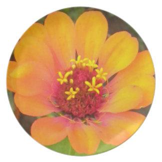 Placa rosada del Zinnia del naranja N Platos Para Fiestas
