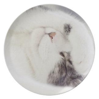 Placa soñolienta del kittycat plato de comida