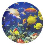 Placa subacuática 5-6 plato de comida