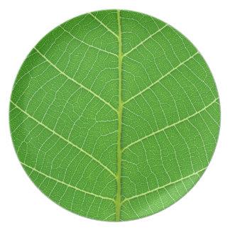 placa verde de la textura de la hoja del árbol de  platos de comidas