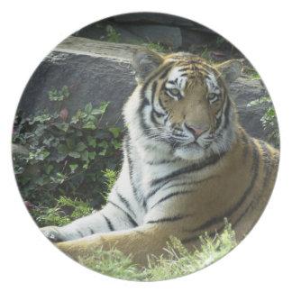 Placa vigilante del tigre plato de cena