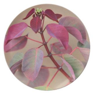 Placa violeta suave de la planta plato para fiesta