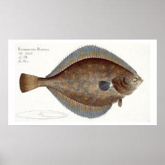 Placa XLII de la platija (Pleuronectes Platessa) d Póster