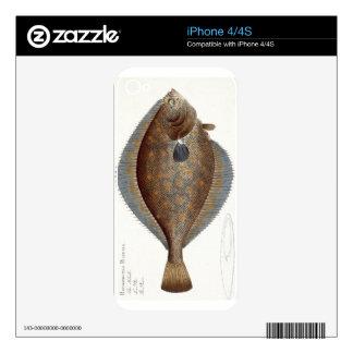 Placa XLII de la platija (Pleuronectes Platessa) d Skin Para El iPhone 4S