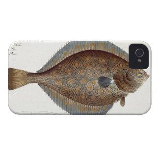 Placa XLII de la platija (Pleuronectes Platessa) iPhone 4 Carcasas