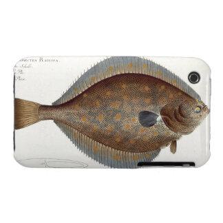 Placa XLII de la platija (Pleuronectes Platessa) iPhone 3 Protectores