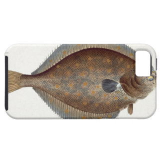 Placa XLII de la platija (Pleuronectes Platessa) iPhone 5 Funda