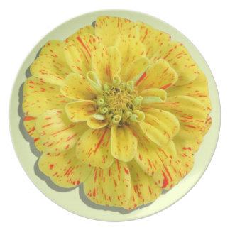 Placa - Zinnia de la raya del caramelo Plato De Cena