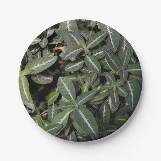 Placas de papel de la planta de terciopelo que se plato de papel de 7 pulgadas