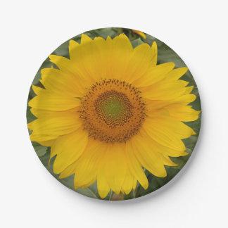 Placas de papel del girasol amarillo de oro plato de papel de 7 pulgadas