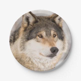 Placas de papel sonrientes del lobo amistoso platos de papel