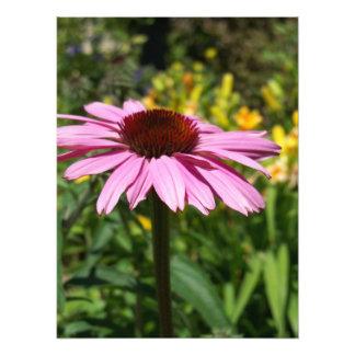 Placer de la flor del cono fotografía