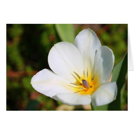 Placer de la flor tarjeton