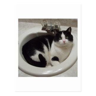 Placer de los amantes del gato postal
