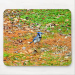 Placer del arrendajo azul alfombrillas de raton