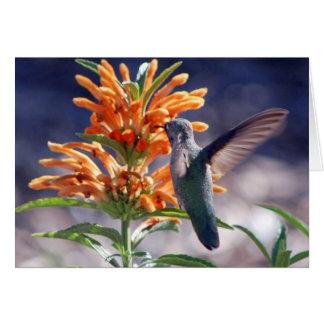 placer del colibrí tarjeta pequeña
