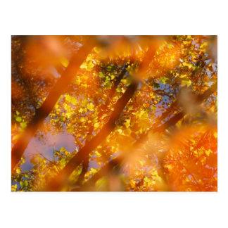 Placer del otoño tarjetas postales