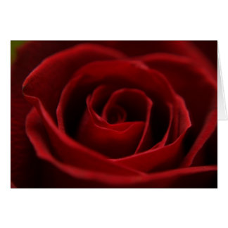 Placid Red Rose Blank Card