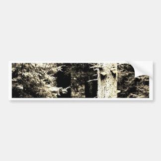 Plagued Pine Bumper Sticker