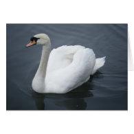Plain card - Swan