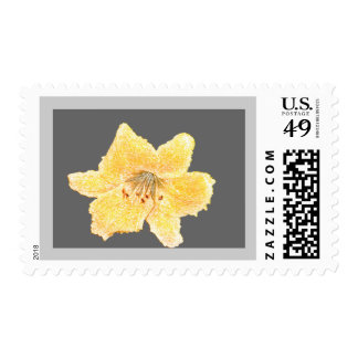 Plain Penciled Yellow Flower Stamps