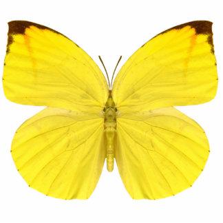 Plain Sulphur Butterfly Pin Statuette
