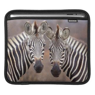 Plain Zebras, Kruger National Park iPad Sleeves