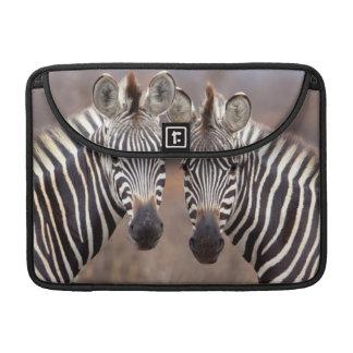 Plain Zebras, Kruger National Park Sleeve For MacBooks