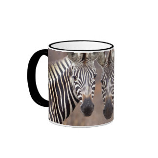 Plain Zebras, Kruger National Park Ringer Coffee Mug