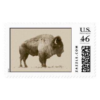 Plains Bison Postage Stamp