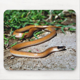 Plains Black-headed Snake Mouse Pad