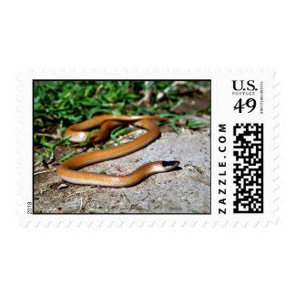 Plains Black-headed Snake Postage Stamp