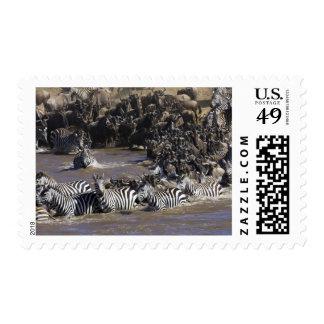Plains Zebra (Equus quagga) and Blue Wildebeest Postage Stamps