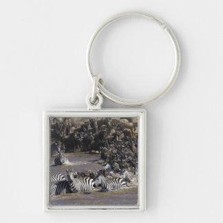 Plains Zebra (Equus quagga) and Blue Wildebeest Silver-Colored Square Keychain