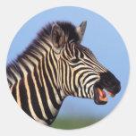 Plains Zebra (Equus Quagga) Calling Classic Round Sticker