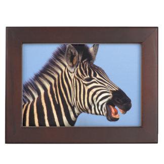 Plains Zebra (Equus Quagga) Calling Keepsake Box