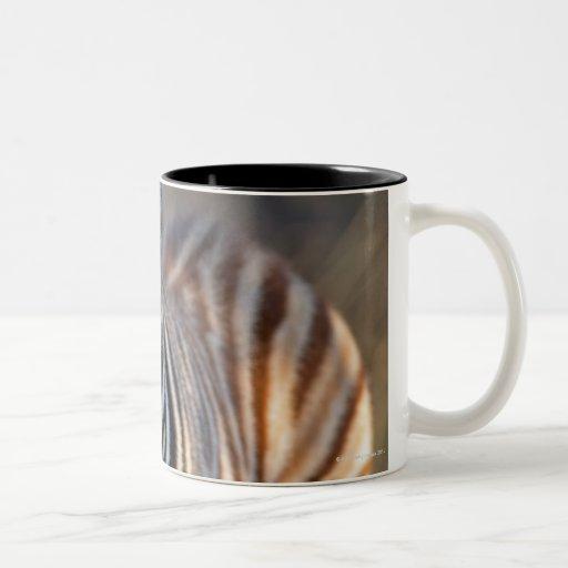 Plains zebra (Equus quagga) foal, Mkhuze Game Two-Tone Coffee Mug
