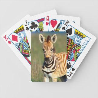 Plains Zebra (Equus Quagga) Foal Portrait Bicycle Playing Cards