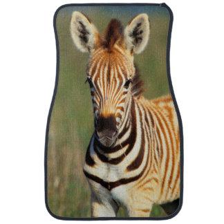 Plains Zebra (Equus Quagga) Foal Portrait Car Floor Mat