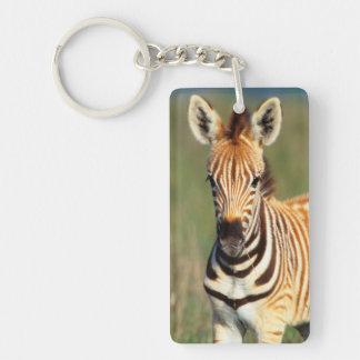 Plains Zebra (Equus Quagga) Foal Portrait Keychain